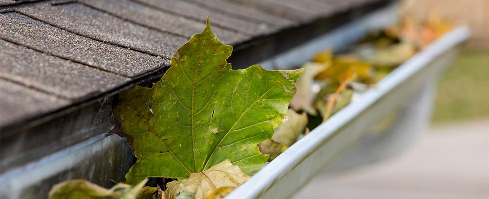 5 Roof Maintenance Tips for Springtime